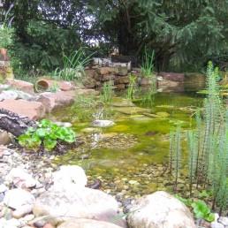 Teich mit Wasserpflanzen
